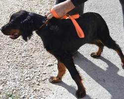 Au Paradis d'Oliver + Centre Canin du Rucher de Massonville - Pont-Sainte-Marie
